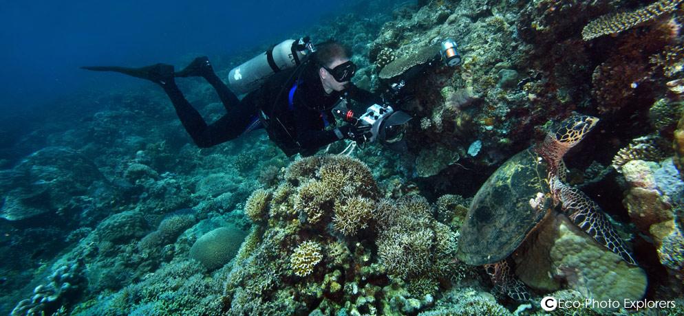 word nieuw promotiecode beste website Apo Reef Diving by Marco Vincent Divers - White Beach Puerto ...